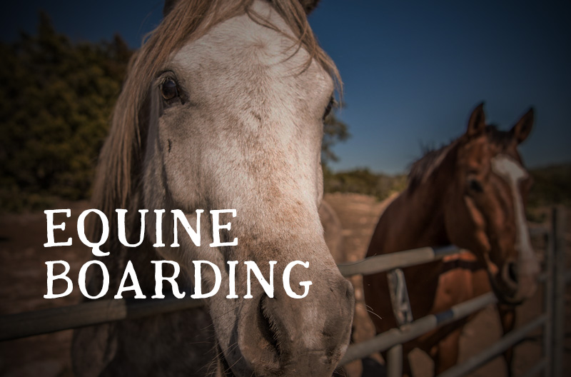 Equine Boarding Texas