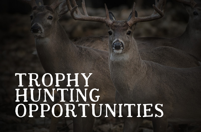 Hunting Opportunities Texas